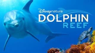 مستند صخره دلفین Dolphin Reef 2020 دوبله فارسی