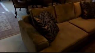 فیلم از رضایت مشتری عزیزمون از مبلمان تولیدی مبل و صندلی