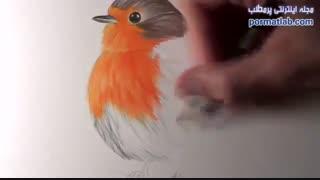آموزش طراحی پرنده - 15095