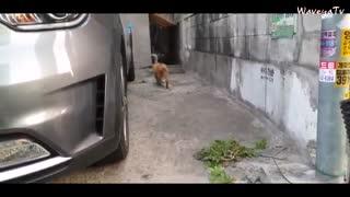 길을 걷다 길냥이를 만나면 | 길고양이 밥주기