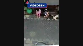 تلاش میمون برای بچه دزدی