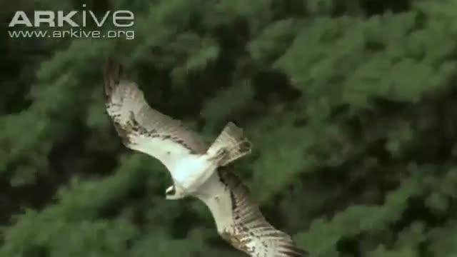 پرواز مرگ  آبزیان
