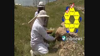 زنجیره سودآور زنبور عسل