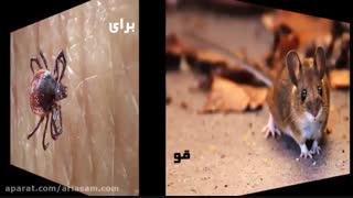 از بین بردن موش با سم طعمه  تضمینی و خارجی
