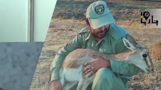 حیوانات حیات وحش ایران نمایشگاه محیط زیست  با حضور بیمارستان دامپزشکی مرکزی
