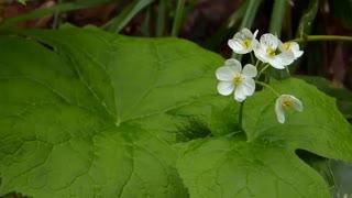 شگفتیهای طبیعت؛ گل اسکلتی