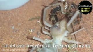 ریشه کن کردن انواع گونه های عنکبوت - سم عنکبوت کش
