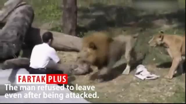 حملات نفسگیر شیر خشمگین به یک مرد