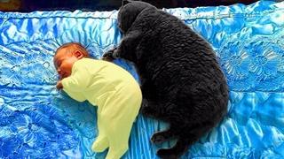 کلیپی از مراقبت گربه از کودکان در یک نگاه